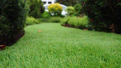 Photo of Несколько советов по уходу за искусственной травой